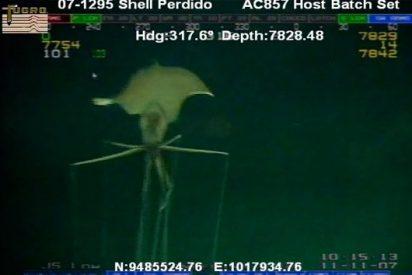 La extraña criatura alienígena que arrasa en Internet tiene las patas muy largas
