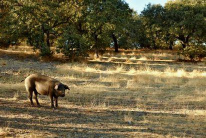"Se estrena ""La Despensa de Sierra de Monfrague"""