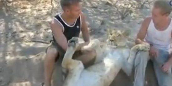 El increíble vídeo del amor de una leona hacia dos ecologistas que la salvaron