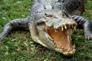 Le ataca un cocodrilo cuando jugaba al golf y sus amigos le salvan de ser devorado