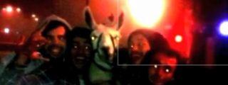 [Vídeo] Roban borrachos una llama de un circo y se la llevan a dar un paseo en tranvía