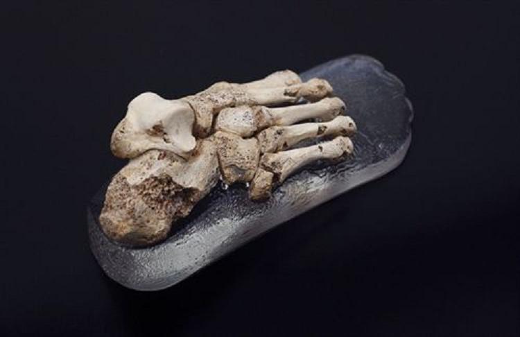 Atapuerca le quiere meter un gol a la 'Roja' con un pie de medio millón de años