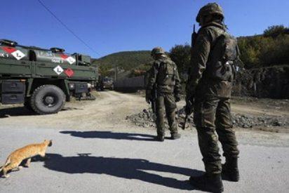 Procesan a una militar de la OTAN por salvar la vida de una gata en Kosovo