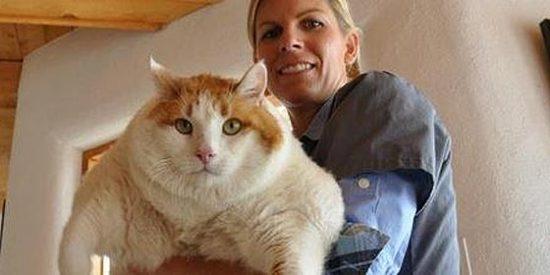 Si su gato no le hace caso no es por no reconocerle, es que simplemente 'pasa'