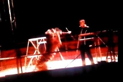 El escalofriante vídeo del tigre que atacó ferozmente a su domador en Madrid