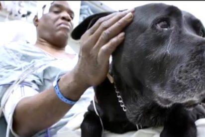 Un ciego se cae a las vías del metro y su valiente perro lazarillo le salva la vida