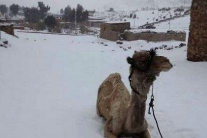 No es broma: este diciembre 2013 ha nevado en Egipto por primera vez desde el siglo XIX