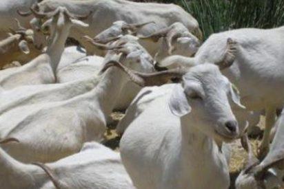 Inversión millonaria para controlar enfermedades animales
