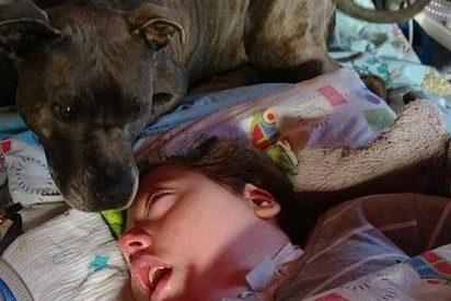[Vídeo] El niño en coma al que quieren quitar la perra que le cuida hace 6 años