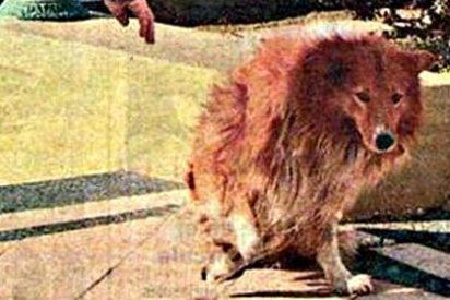 Muere el perro argentino que permaneció nueve años junto a la tumba de su dueño