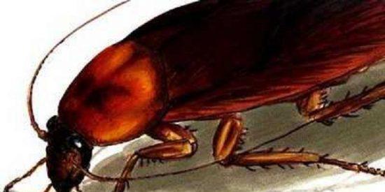 Le dolían horrores los oídos y con razón: llevaba dentro...¡una cucaracha gigante!