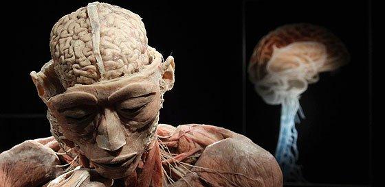 Los diez 'oscuros' secretos del cuerpo humano que te dejarán con la boca abierta