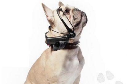 Su perro le dirá pronto lo que piensa sin necesidad de ladrarle 'a grito pelado'