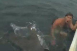 [Vídeo] Se mete en el agua con unos pájaros muertos y un tiburón tigre casi lo devora