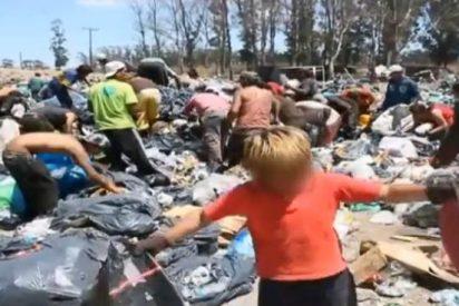 [Vídeo] En Mar del Plata no es oro todo lo que reluce: los niños trabajan en el vertedero entre ratas