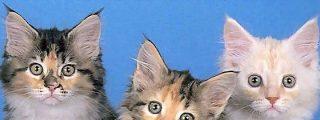 El dueño de un refugio de animales se zampaba a todos los gatos que le traían