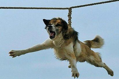 El vídeo del bárbaro ritual del 'giro del perro' que pone de los nervios a todo el mundo