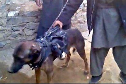 """Los talibanes afganos a los marines de EEUU: """"Tenemos a vuestro perro"""""""