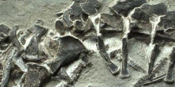 Un fósil de ictiosaurio preserva un nacimiento de un antiguo reptil