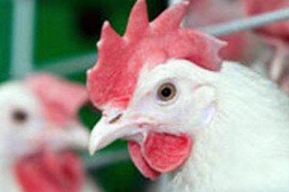 Por raro que parezca han encontrado un nuevo estado de la materia...en los ojos de un pollo