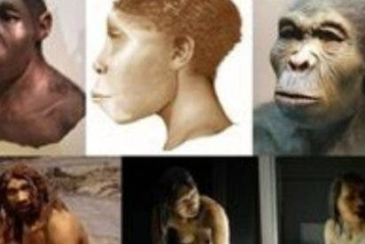 `Homo´, único primate al cual el tamaño de los dientes ha ido decreciendo a medida que aumentaba el tamaño del cerebro