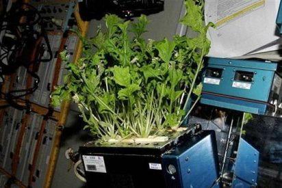 Ya tenemos toda una huerta de verduras en el espacio, y sin necesidad de un jardinero