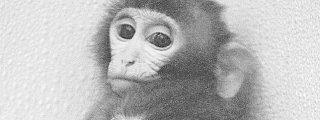 Los científicos aconsejan a los bancos que aprendan de los macacos para dejar de meter la pata