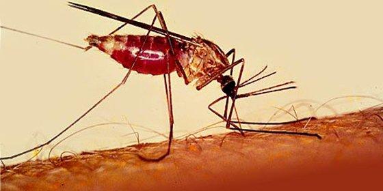 Los nazis querían matar a todo bicho viviente atacando con mosquitos en la II Guerra Mundial