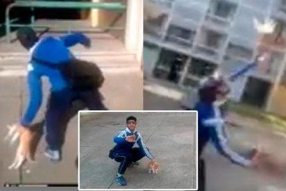 [Vídeo] Un año de cárcel para el cruel descerebrado que maltrató a un gato a conciencia