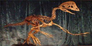 Encuentran los restos del aterrador 'pollo del infierno' que vivió hace 66 millones de años