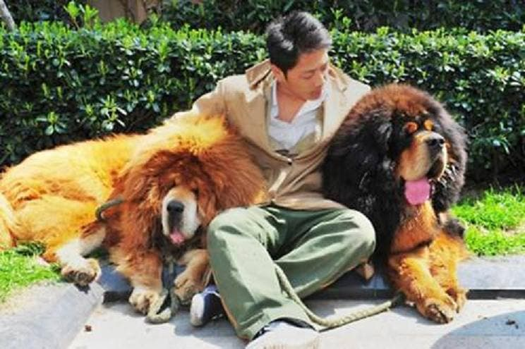 Con el perro más caro del mundo se va rabiosamente a la moda si se tienen 1,4 millones