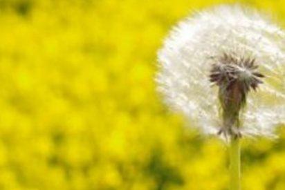 Aplicaciones que muestran el nivel de polen en el ambiente hacen más llevadera la vida de los alérgicos