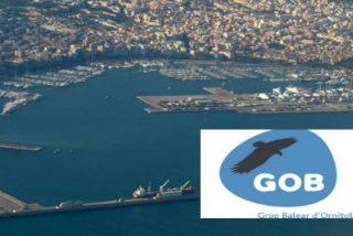 """El GOB no traga con la ampliación del puerto de Palma: """"Ocupará en el mar una dimensión de 48 campos de fútbol"""""""