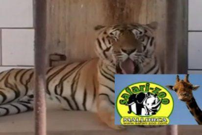 Denuncian que el zoo de Sa Coma no es apto para albergar a dos nuevas elefantas