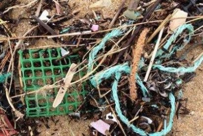 La Universidad de Alcalá constata la existencia de una gran cantidad de plásticos arrojados por el mar