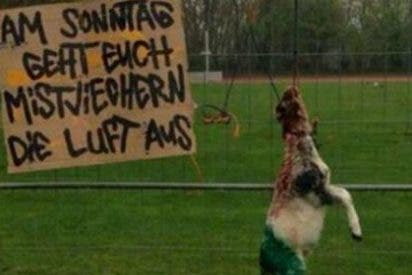 Sacrifican a un animal y cuelgan esta macabra fotografía para calentar un partido