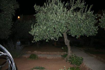 Pasión y oración bajo los olivos milenarios de Getsemaní