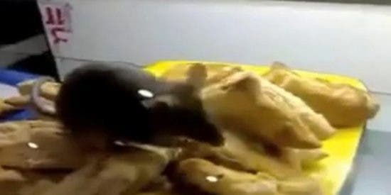 [Vídeo] Una rata descarada se come unos bocadillos en el bar del aeropuerto