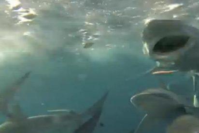 El vídeo de los feroces tiburones que persiguen a unos pescadores le dejará con la boca abierta