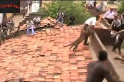 [Vídeo] Un leopardo es descubierto en una azotea y ataca a los vecinos hecho una fiera