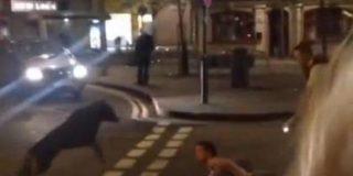 El escalofriante vídeo del perro policía que muerde en el cuello a un indefenso detenido