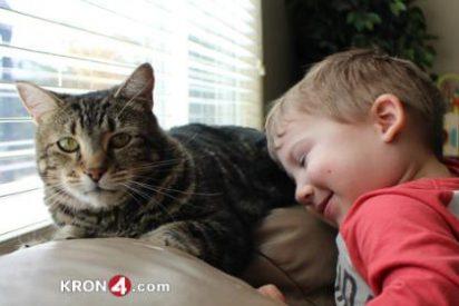 La gata que salvó al niño del perro feroz se convierte en una estrella de la televisión
