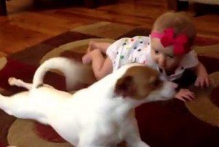 El adorable vídeo del perro que quiere enseñar a gatear al bebé de la casa