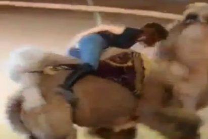 El vídeo de la 'ceniza' que hace el ridículo padre en el circo con los pantalones rotos