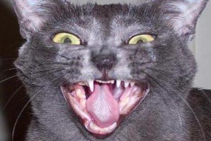 El terror a los gatos le ha arruinado la vida a una madre de familia que está de los nervios
