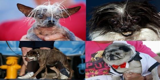 Las fotos de los perros más feos del mundo que te harán quererlos todavía mucho más