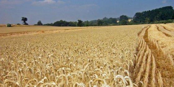 Soriano anuncia el pago de 1,2 millones para agrosistemas de secano