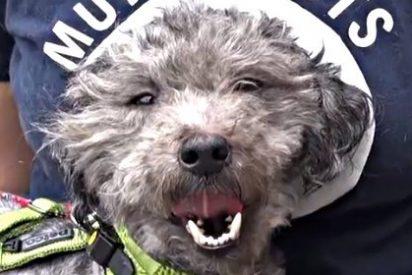 Así sufre un perro cuando su desalmado dueño lo abandona