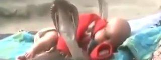 El escalofriante vídeo del bebé al que velan su sueño 4 cobras al ataque