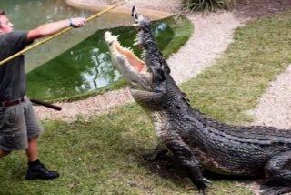 Acaba entre las fauces de un enorme cocodrilo ante la horrorizada mirada de los niños